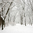 Winter in park - trees covered with snow — Stock Photo
