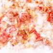 Dry roses beautiful, artistic background — Stock Photo