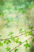Krásné přírodní listy grunge, umělecké zázemí — Stock fotografie