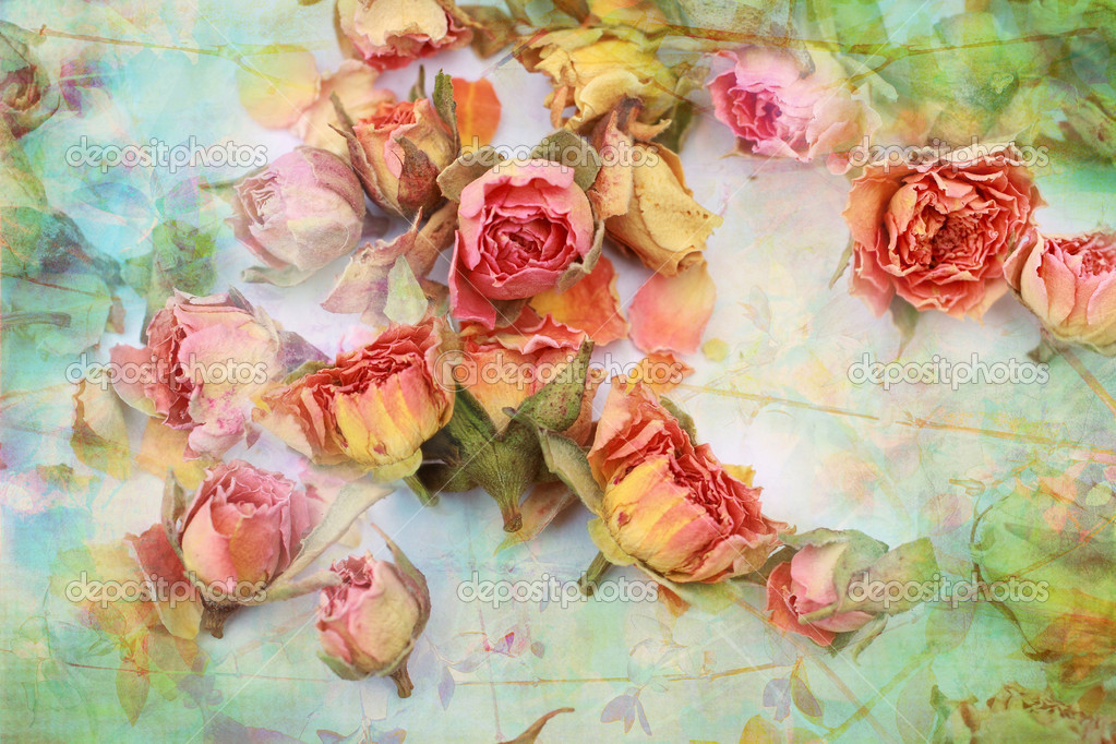 Dry roses beautiful vintage background — Stock Photo #10005441