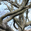 Unusual tree branches close up — Stock Photo