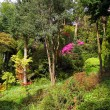Stock Photo: Pink azalea and conifer trees in the old garden