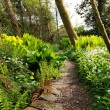 Beautiful Spring garden with blooming flowers and a path — Stockfoto
