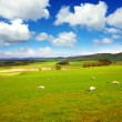 Beautiful Spring landscape with sheep in Scotland — Stock Photo