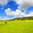 Beautiful Spring landscape in Scotland — Stock Photo