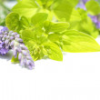 Fresh lavender and marjoram, close up - Stok fotoğraf