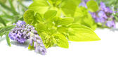 Fresh lavender and marjoram, close up — Stock Photo