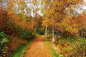Autumn in the park, Scotland — Stock Photo