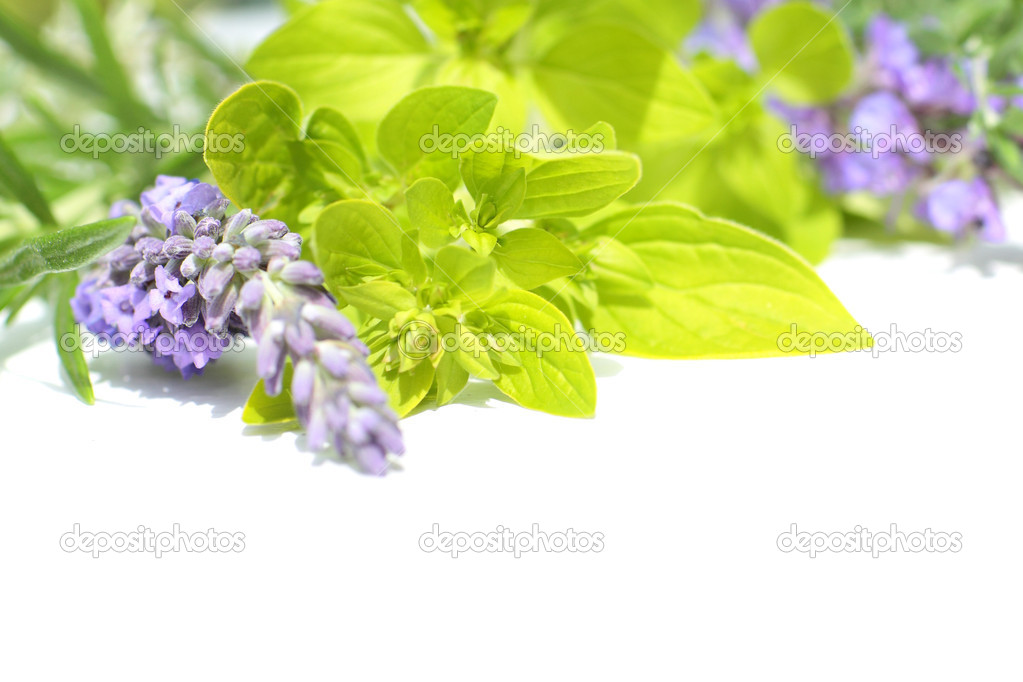 Fresh lavender and marjoram close up isolated on white — Stock Photo #8407522