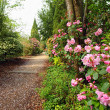 Beautiful park with azalea flowers in the Springtime — Stock Photo