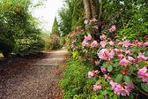 Prachtig park met azalea bloemen in de lente — Stockfoto
