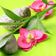 Branch of bamboo, stones and orchids on a green background, spa concept — Foto de Stock