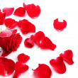 Red Rose & Petals - Stock Photo