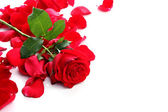 Red Rose & Petals — Stock Photo