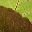 Close-up of Leaf Veins — Stock Photo