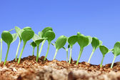 Small watermelon seedling against blue sky — Stock Photo