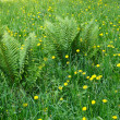 Dandelions and other motley grass — Stock Photo