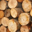 Sliced wooden logs - Stock Photo