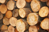 Sliced wooden logs — Stock Photo