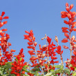 Stock Photo: Red bright flowers