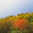 Colourful coastal plants - Stock Photo