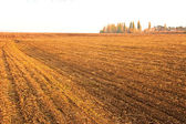 Sown cereals autumn field — Stock Photo