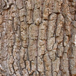 Fragment of old tree bark — Stock Photo