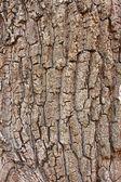 Frammento della vecchia corteccia d'albero — Foto Stock