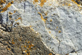 Stone partially covered with lichens — Stock Photo