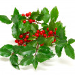 Holly twig — Stock Photo #9391048