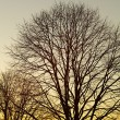 Strip of tree branches silhouette sunset — Stock Photo