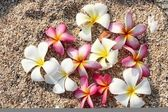 Leelawadee flower on the sand — Stock Photo