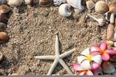 Starfish and leelawadee flower with shell on sand — Стоковое фото