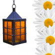 Stock Photo: Chamomile flowers and lights.