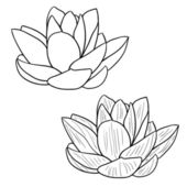 Oriental lotus - a flower Vector illustration. — Stock Photo
