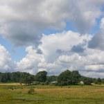 Summer land sky horizon — Stock Photo