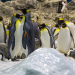 Arctic penguin — Stockfoto #9590611