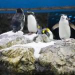Arctic penguin — Stock Photo