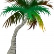 Palm tree isolated on white background - Stock Vector