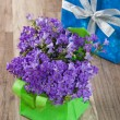 Spring bouquet campanula blue and gift box, a close up — Stock Photo #9468115