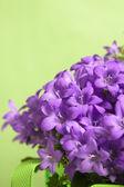 Luffa closeup — Foto Stock