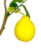 Ripe fruit on the branch of a lemon on a white background — Stock Photo