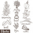Culinary herbs set - Stock Vector