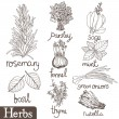 Stock Vector: Culinary herbs set