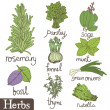 Herbs set — Stock Vector #10662600