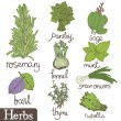 Stock Vector: Herbs set