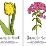 Tulips and phlox card — Stock Vector #10665814