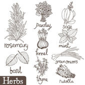 Culinary herbs set — Stock Vector