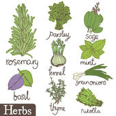 Herbs set — Stock Vector