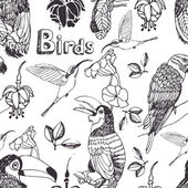 Tropical birds background — Vetorial Stock